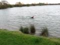 SwimmingKingLearsLake.png