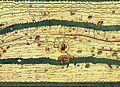 Tabula Peutingeriana ROMA.JPG