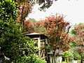 Taipei Maple Resort 台北奧萬大 - panoramio.jpg
