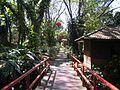 Tao garden ciangmajuje.JPG