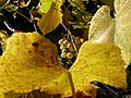 Tarnaveni - harvest - embrace - panoramio.jpg