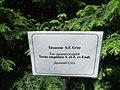 Taxus cuspidata Odessa Botanical garden, plaque.jpg