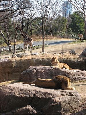 Tennōji Zoo - Savannah Zone