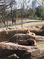 Tennoji zoo nzabi.jpg