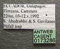 Tetramorium caldarium casent0173286 label 1.jpg