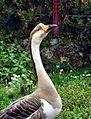 The King Goose.jpg