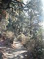 The way to Tiger's Nest - panoramio.jpg