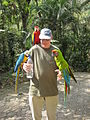 Three macaws -Macaw Mountain Bird Park, Honduras-8a.jpg