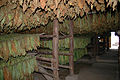 Tobacco drying in Pinar del Río (02).jpg