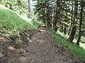 Todd Springs Trail Work, 2012 (26921910468).jpg