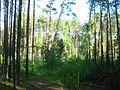 Tomsky District, Tomsk Oblast, Russia - panoramio (89).jpg