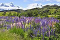 Torres del Paine, flora 14.jpg