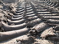 Tractor tracks, Bretagne.jpg