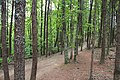 Trail on Pine Mountain (Bartow County, Georgia), May 2018.jpg