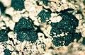 Trapeliopsis granulosa-3.jpg