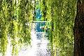 Trauerweide im Parc Leopold, Etterbeek (Region Bruxelloise).jpg