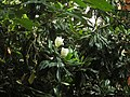 Tree And A Big Flower 01 - panoramio.jpg