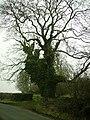 Tree Middle Fell Gate - geograph.org.uk - 116566.jpg