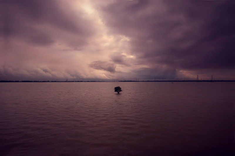 Plik:Tree in flooded field.jpg