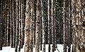 Tree maze (Unsplash).jpg