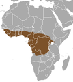 Tree pangolin area.png