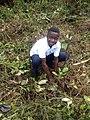 Tree planting 01.jpg