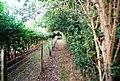 Tunbridge Wells Circular Path - heading to Southborough (3) - geograph.org.uk - 1494090.jpg