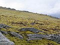 Tundra-like Summit plateau of Sgurr na Ruaidhe - geograph.org.uk - 170786.jpg