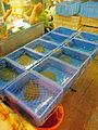 Turtles in wet market, Shenzhen, China.jpg