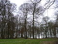 Unhill Wood - geograph.org.uk - 129863.jpg