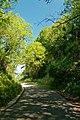 Varengeville-sur-Mer - La Descente du Petit Ailly - Rue Lemoine - View North I.jpg