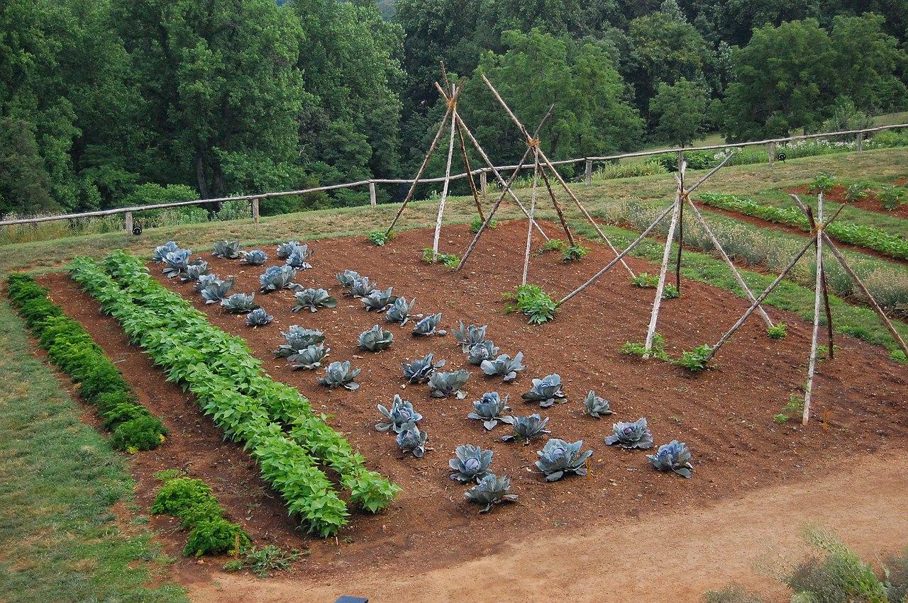 Starting a backyard vegetable garden - 4 How To Design And Plan Your Backyard Vegetable Garden