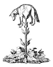 Vegetable lamb (Lee, 1887).jpg