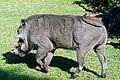 Victoria Falls 2012 05 24 1592 (7421898758).jpg