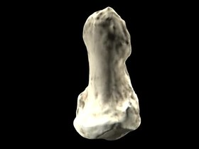 Ficheiro:Video rendering of Orrorin tugenensis pollical distal phalanx - pone.0011727.s003.ogv