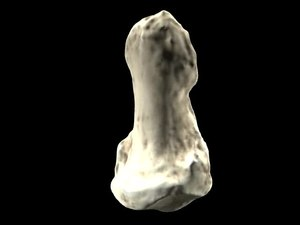 File:Video rendering of Orrorin tugenensis pollical distal phalanx - pone.0011727.s003.ogv