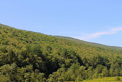 View of West Cameron Township, Northumberland County, Pennsylvania looking south.JPG