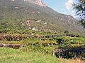 Vigneti a terrazze, Donnas, DSCN9435 color.jpg