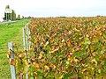 Vignoble de l'AOC Saint-Pourçain à Besson.jpg