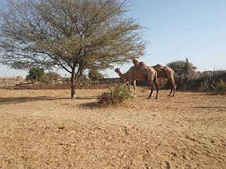 Village sur la route d'AM-TIMAN01-Tchad.jpg