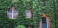 Vine-Covered Brownstone, Stevens Square, Minneapolis (23533319055).jpg