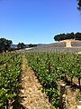 Vineyards at Justin in Paso Robles.jpg