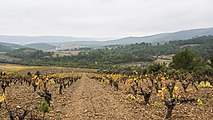 Vineyards in Cessenon-sur-Orb 02.jpg
