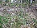 Vloeiveld Boerhave (30698022360).jpg