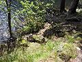 Vylet k Cernemu jezeru Sumava - 9.srpna 2010 193.JPG