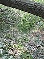WE Debris on trails (6099822085).jpg