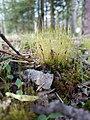 WW Moss & Lichens TMS - 49039492208.jpg