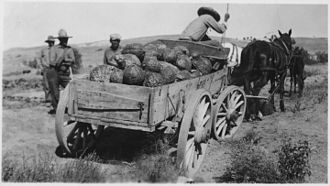 Indian reservation - Wagon loaded with squash, Rosebud Indian Reservation, ca. 1936
