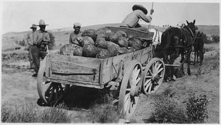 Wagon loaded with squash, Rosebud Indian Reservation, ca. 1936