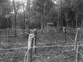Waldverhaue mit Stacheldrahthindernissen - CH-BAR - 3236587.tif